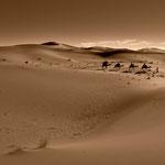 Wüstenschiffe im Meer aus Sand