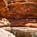 Auf dem Weg des King Canyons Rim Walk der etwa 6 km lang ist, kommt man unter anderem an einem Pool vorbei, in dem man baden kann.