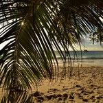 Unter Palmen an der Anse Lazio auf Praslin