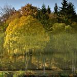 Im Basaltsee spiegeln sich die herbstgefärbten Bäume