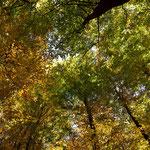 Herbstmosaik der Laubbäume