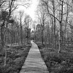 """Auf einem Weg aus Bretter zum Schutz der Vegetation im """" Roten Moor """""""