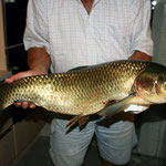 Grasfisch 82cm, 12,5 kg, Weiher 3, August 2013