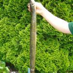 Aal, 78 cm, 1,1 Kg, Weiher 4, Juni