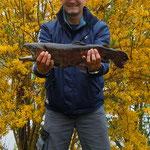 Regebogenforelle, 57 cm,  1,85 Kg, Weiher 1, April