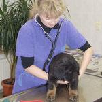 Beim Tierarzt wird zuerst der Gesundheitscheck gemacht.