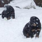 Da müssen wir doch gleich durch den frisch geschneiten Schnee toben!