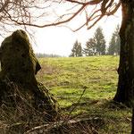 Menhire in der Rhön