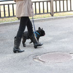 大阪城でお散歩中のブヒ。(2012.3.2)