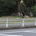 川崎の富岡総合公園で見つけたブヒ。こっちにいきたいんだー!という強い意志を感じました。(2012.4.8)
