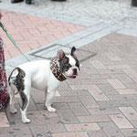 横浜駅の前で飼い主さんと休憩中のブヒ。(2011.10.8)