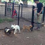 代々木公園のドッグランにはたくさんのブヒたちがいました…!!写真はほんの一例です。またきます。(2014.5.3)