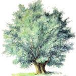 Weide der Schäferin (Drönnewitz)