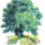 Sommereiche am Feldweg (zwischen Drönnewitz und Neuhof)