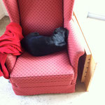 ...deshalb nun lieber der Sessel im Atelier...