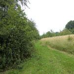 """""""Bünte"""" 6/2011 gemähte Bahn zwischen Benjeshecke und hohem Gras"""