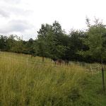 """""""Bünte"""" 6/2011 Hohes Grasland"""