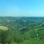 Green hills of Le Marche