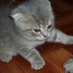 Вот такая я злая кошка!!!