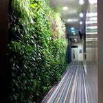 vertikale bepflanzungen