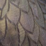 Gefieder eines Kormorans © Robert Hansen. Link in die Fotogalerie
