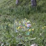 「空っぽ」森の展示室2021 ( 写真・大橋史人)Empty - Exhibition in the woods of wild grass in Wachi 2021 / Acrylic on Glass / 36×36×33cm