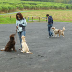 Hundebegegnungen gelassen entgegensehen