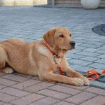 Übung Platz Welpe/Junghund