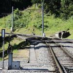 Schweizer-Eisenbahnen Bahnhof Grütschalp