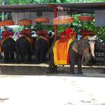 象から見た象たち。