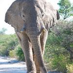 びびる~~!でも、象の足の裏をしっかり観察。。。