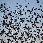 たくさんの鳥が水場の周りを旋回していました。