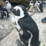 1mほどの距離にいるペンギンさん。さらに寄ってみます。すると。。。