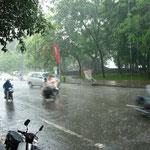 降ってきたな~。と思ったら、見る見るうちに大雨に!