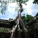 カンボジア/タ・プローム。木の根に取り込まれてしまった遺跡。勝手にガイドさんのアドバイスでいい写真が撮れました~。