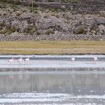 塩湖といえば、フラミンゴ。数は少ないですが、けっこう近くで見られます。