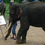 象の絵を描く象。。。すごい!
