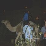 ラクダに乗って楽団を従えて練り歩きます。