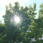 木漏れ日というものを撮影してみました。ちゃんと写るものですね~。
