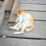 猫はお昼寝。。。zzz