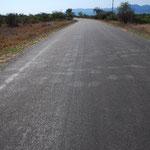 道路を横切る象の足跡。象は糞も大きくて痕跡がわかりやすいです。