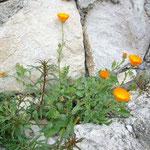 鮮やかな蛍光オレンジの花。
