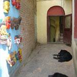 路地でお昼寝。犬が寝ている場所は必ず涼しい~。