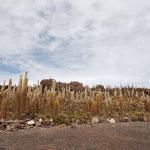 正式には「インカワシ島」という名前。塩に侵されていないので、植物が生えています。