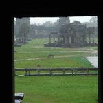 雨宿りをしていると、馬が1頭たたずんでいるのが見えました。前に座っているインド人が「雨に歌えば」を口笛で吹いています。いいね~。
