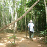ジャングルを歩きます。