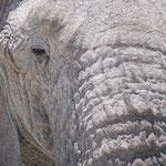 象のまつ毛もけっこう長くてかわいい。。。