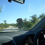 対向車線に、象が。。。象が近づいてくる~!