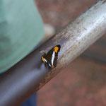 きれいな蝶を眺めながら、列車を待ちます。