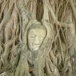 木の幹から出てきた仏像の首。厳しくて神々しい。